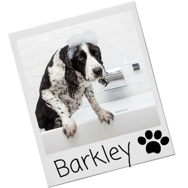 Shampoo for dogs - grooming products